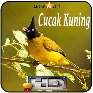 Cucak Kuning Top - náhled