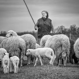 Shepherdess  by Nenad Borojevic Foto - Black & White Portraits & People ( shepherdess, sheep, sheeps,  )