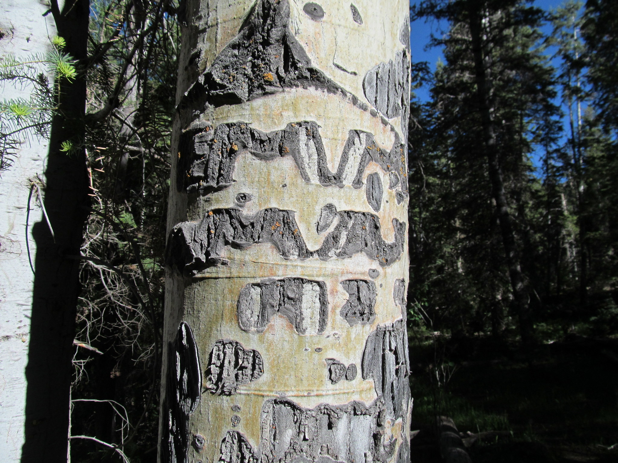 Photo: 1925 aspen carving