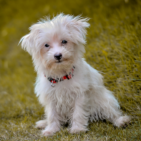 Floppy pose # 2 by Dave Lerio - Animals - Dogs Puppies