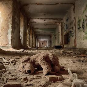 Lonely Bear by Ana Paula Filipe - Artistic Objects Toys ( old, bear, decay, abandoned, interior )