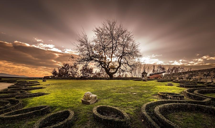 Dying Light by Widefocus Photography - Landscapes Sunsets & Sunrises ( tree, sunset, fine art, castle, portugal, garden )