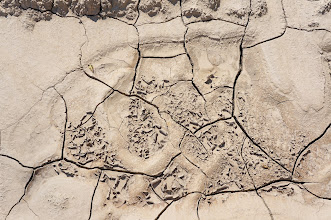 Photo: Mud cracks in the loess