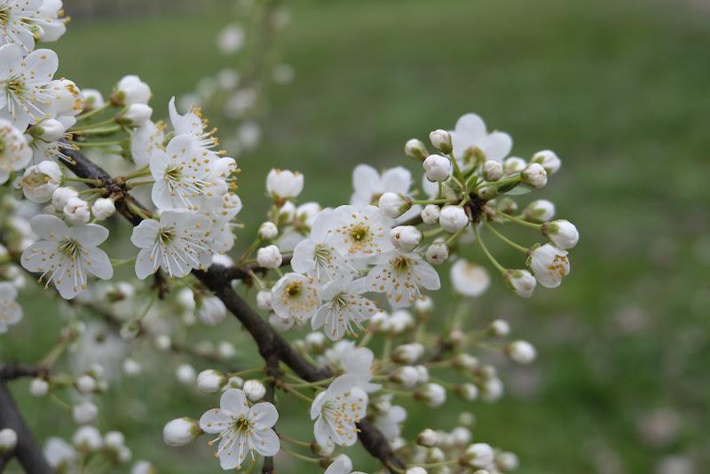 Aria di Primavera di Cristallosognante