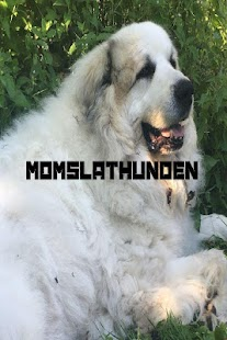 Momslathunden- screenshot thumbnail