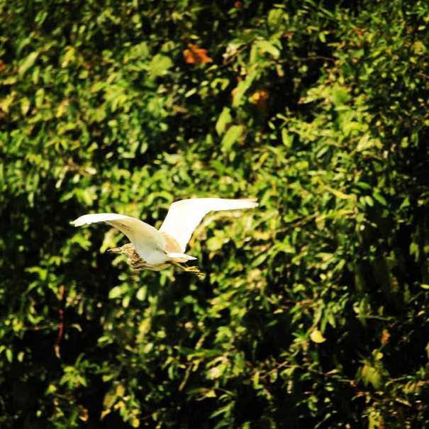 Ngapali-Beach-Bird