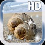 Sea shell Live Wallpaper v1.1