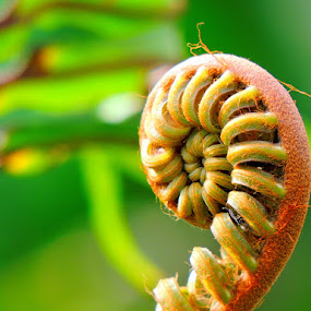 Fern shoot by Yusop Sulaiman - Nature Up Close Other plants
