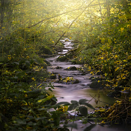 Forest river by Robin Tobon - Landscapes Forests ( forest, fall, sweden, river,  )
