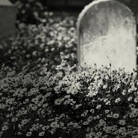 Eternity by Brenda Shoemake - Black & White Objects & Still Life