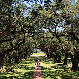 Oak Alley Plantation by Steve Randall - City,  Street & Park  Historic Districts