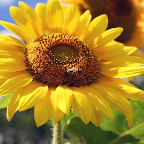 by Barbara Lokken - Flowers Single Flower