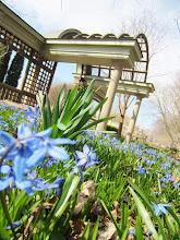 Photo: Blue flowers in front of an arched gazebo at Wegerzyn Gardens in Dayton, Ohio.