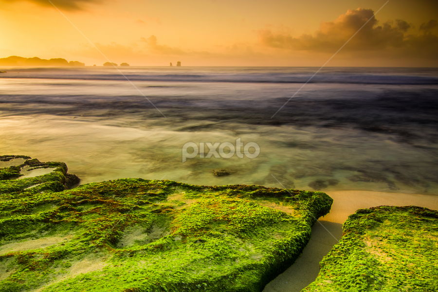 Morning green... by Andy Bagus - Landscapes Beaches