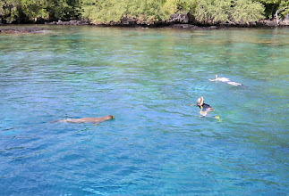 Photo: Monk seal and snorkelers from our boat in Kealakekua Bay