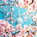 Pink Cherry Blossom Wallpaper icon