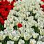 The odd one out by Fathuddin Riyadz - Nature Up Close Flowers - 2011-2013