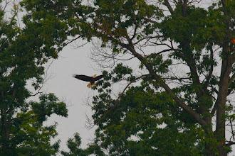 Photo: Landing to perch