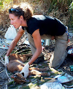 Lead researcher Laurel Serieys with a caracal.