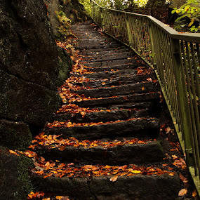 by Graham Sivills FBCS - Landscapes Forests ( rochdale, autumn, healey dell, steps, leaves,  )