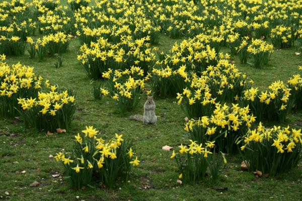 Lo scoiattolo londinese di stefi86
