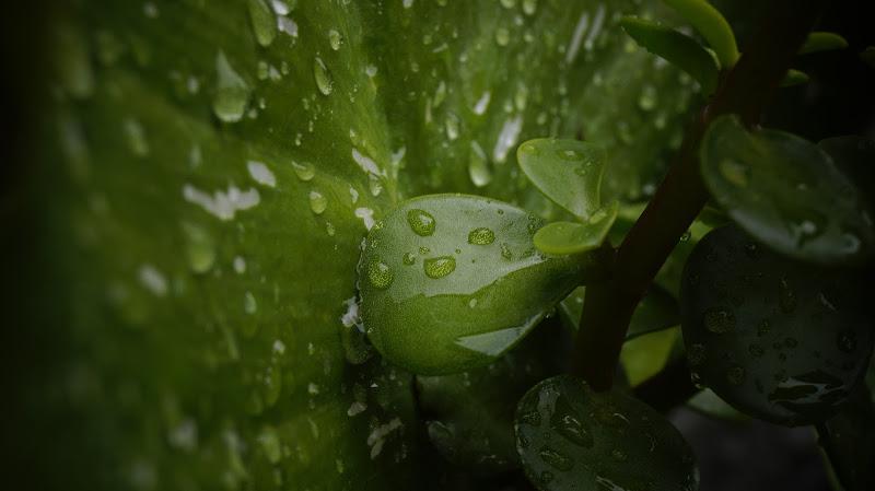 Cold rain di Adam_f
