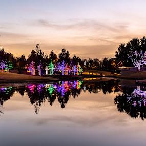 addison lights by Bert Templeton - Public Holidays Christmas ( addison, texas, vitruvian, christmas, lights,  )