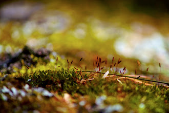 Photo: #144 Moss