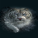 Tiger Splash Live Wallpaper icon