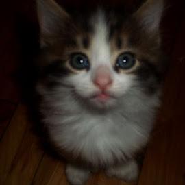 Coucou by Linda Czerwinski-Scott - Animals - Cats Kittens ( feline, kitten, cat, baby animals )