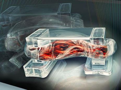 3D печать: собственные биоботы