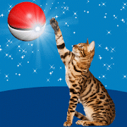 Game Cat Go! Pocket Cats APK for Windows Phone