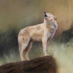 The Howling by Rich Reynolds - Digital Art Animals ( wolf, howling, tundra, alaska, white, mist )