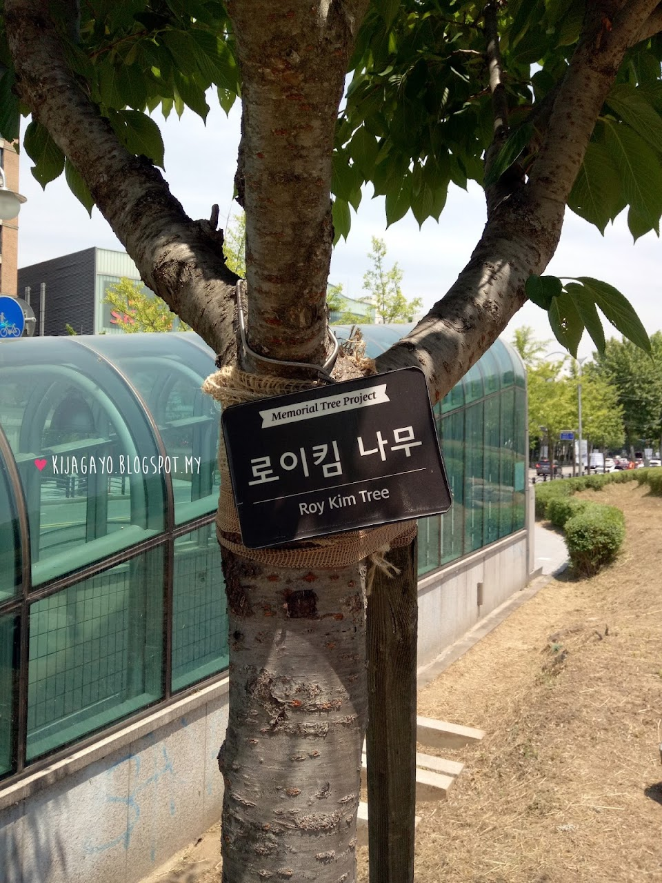 Roy Kim Forest2