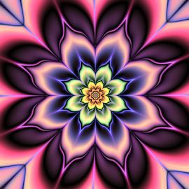 Flower 5 by Cassy 67 - Illustration Abstract & Patterns ( purple, digital art, fractal art, harmony, pink, flowers, fractal, light, digital, fractals, flower )
