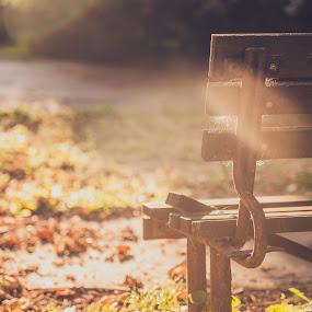 The Bench by Lubomir Gobs - City,  Street & Park  City Parks ( bench, d700, autumn, czech, trip, nikon, sun )