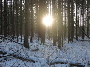 Photo: Восход в лесу