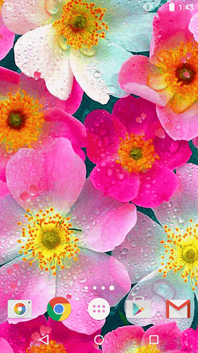 Download Flowers Live Wallpaper Free For Android Flowers Live Wallpaper Apk Download Steprimo Com