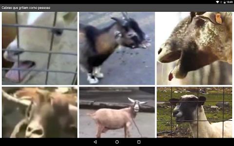 Cabras que gritam como pessoas screenshot 3