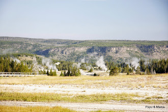 Photo: You could see steam from the other geysers in the Upper Geyser Basin