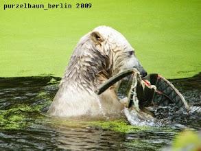 Photo: Froehliches Planschen mit dem Aussie Dog :-)