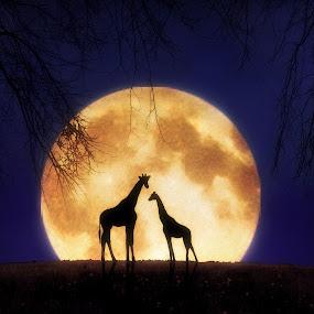 The Giraffes at Midnight by Jennifer Woodward - Digital Art Places ( moon, animals, giraffe, silhouette, wildlife, night, landscape, africa, moonlight )