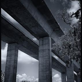 Bridge over Park by Damon Hensley - Buildings & Architecture Bridges & Suspended Structures ( nature interupted, park, bridge )