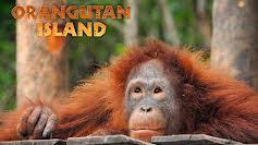 Orangutan Island (S2E8)