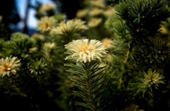 Photo: #flowers  #floral  #flora