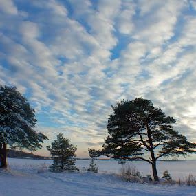 winterwonderland by Cecilie Hansteensen - Landscapes Cloud Formations ( fredrikstad, winter, nature, ice, snow, cloads, trees, winterwonderland, landscape, sun, norway,  )