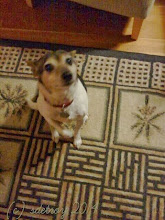 Photo: My wee dog awaiting, wanting. He is so quiet. I assume he is waiting to be petted when I arrive home.