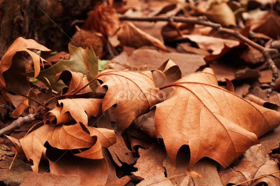 Autumn Leaves by Craighead Photo - Nature Up Close Leaves & Grasses ( fall leaves on ground, fall leaves, park, autumn, pwcautumn, brown, leaves )