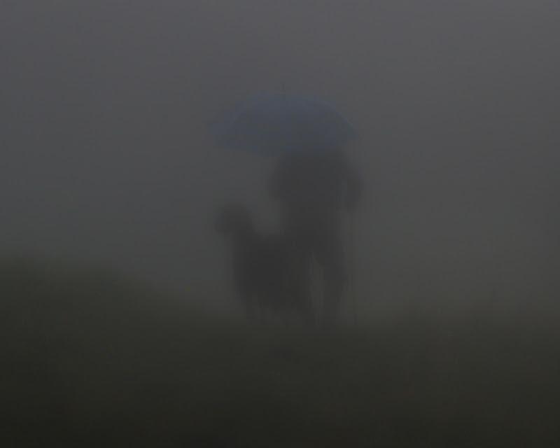 l'uomo che fissa le capre di Photo Art 71