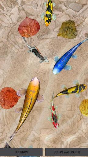 About 3D Koi Fish Wallpaper HD